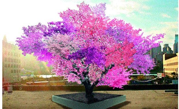 A man creates a beautiful tree that bears 40 kinds of fruit