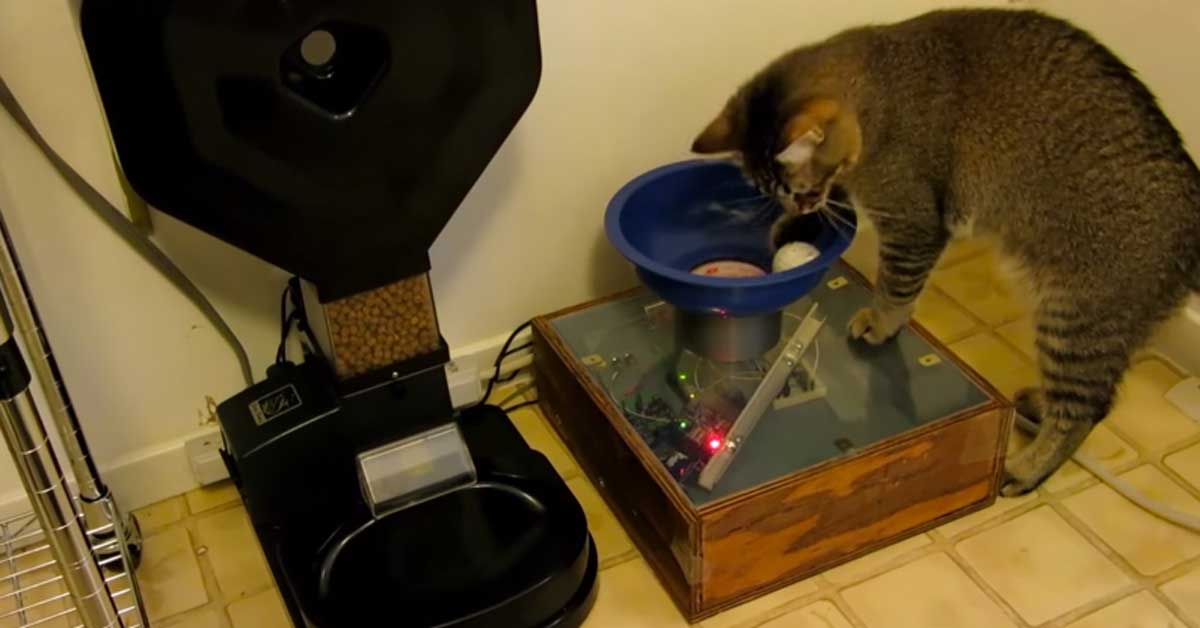Brilliant Cat Feeder Ever Created