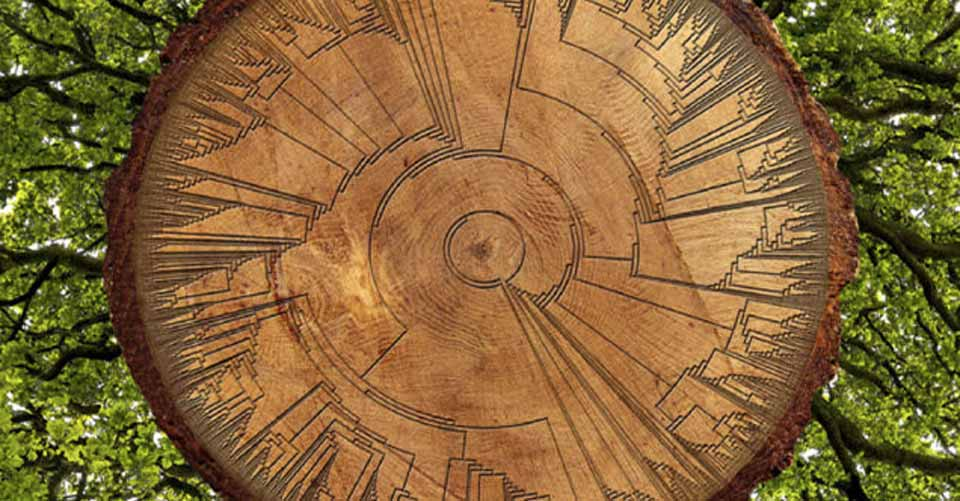 "The Very First ""Tree Of Life"" Is Here – And It's Free!"