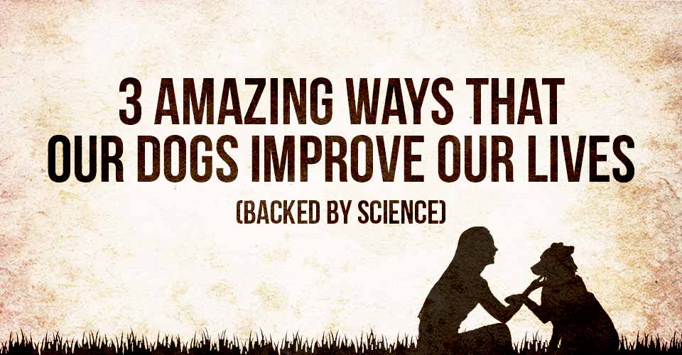 Amazing Ways that our Dogs Improve Our Lives