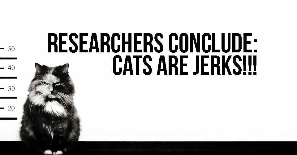 cats-are-jerks
