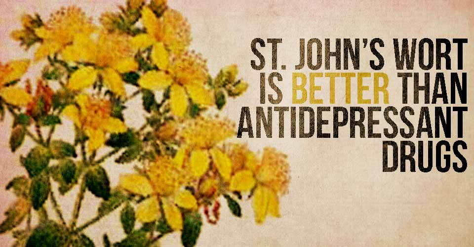 St. John's Wort is Better Than Antidepressant Drugs