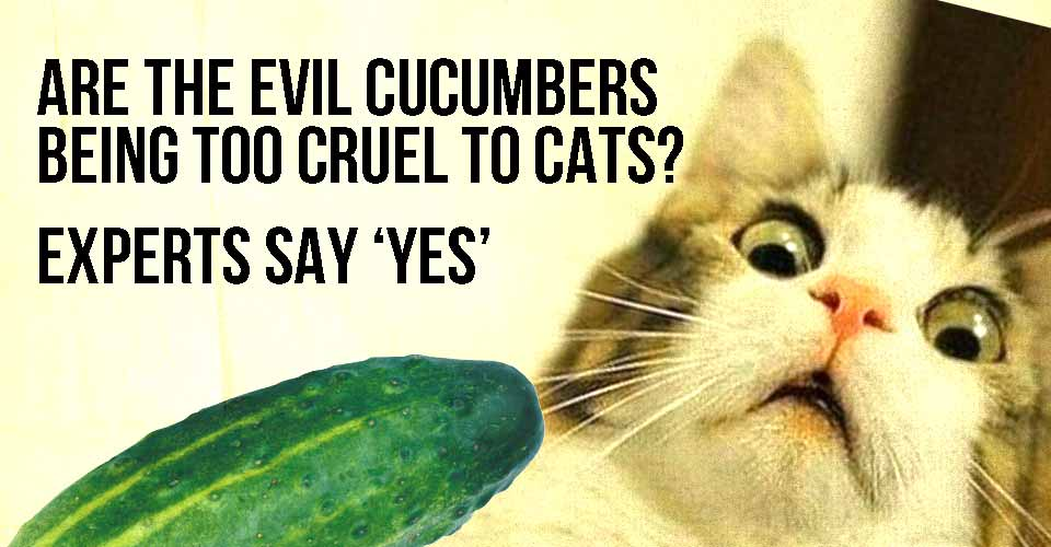 Are The Evil Cucumbers Being Too Cruel To Cats
