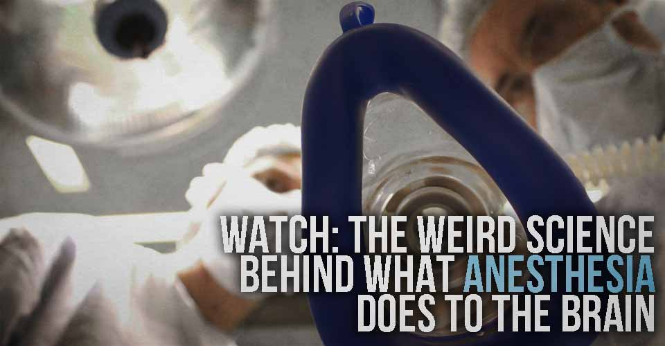 WATCH: The Weird Science Behind What Anesthesia Does to the Brain