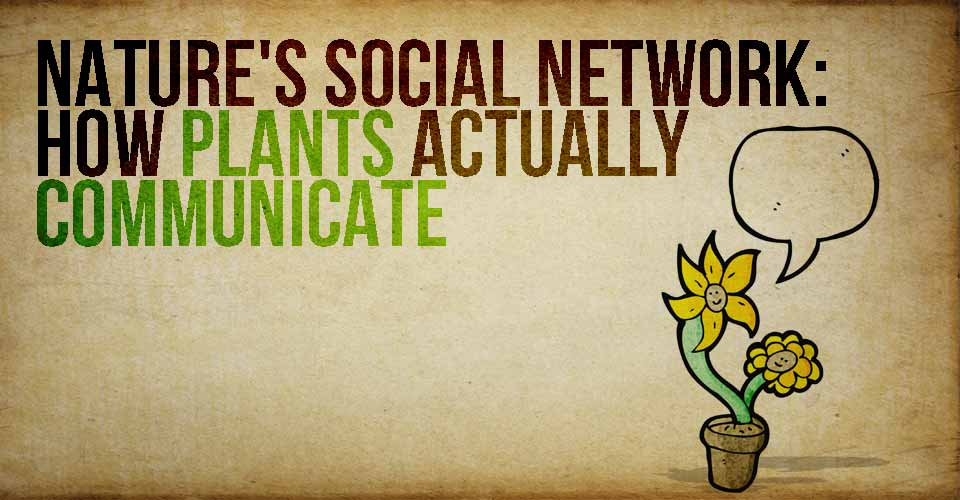 Nature's Social Network: How Plants Actually Communicate