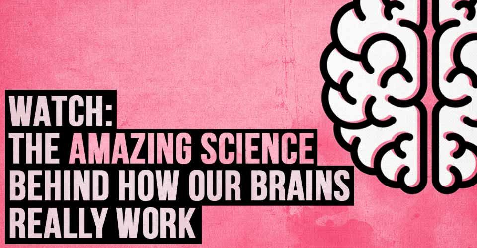 WATCH: The Amazing Science Behind How our Brains Really Work