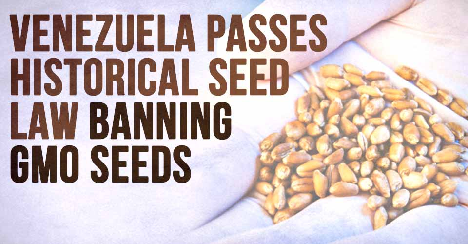 Venezuela Passes Historical Seed Law Banning GMO Seeds