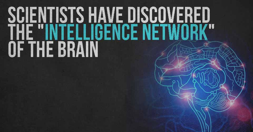 "Scientists have Discovered the ""Intelligence Network"" of the Brain"