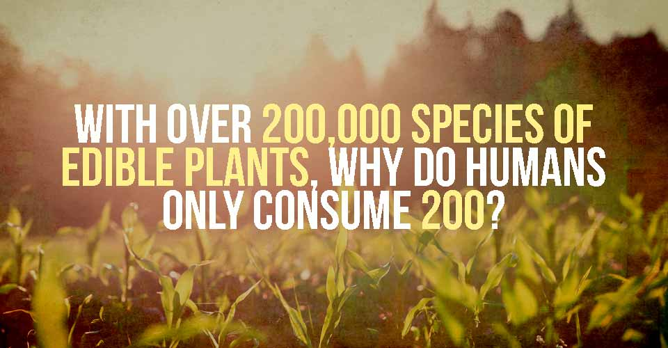 With over 200,000 Species of Edible Plants, Why Do Humans only Consume 200?
