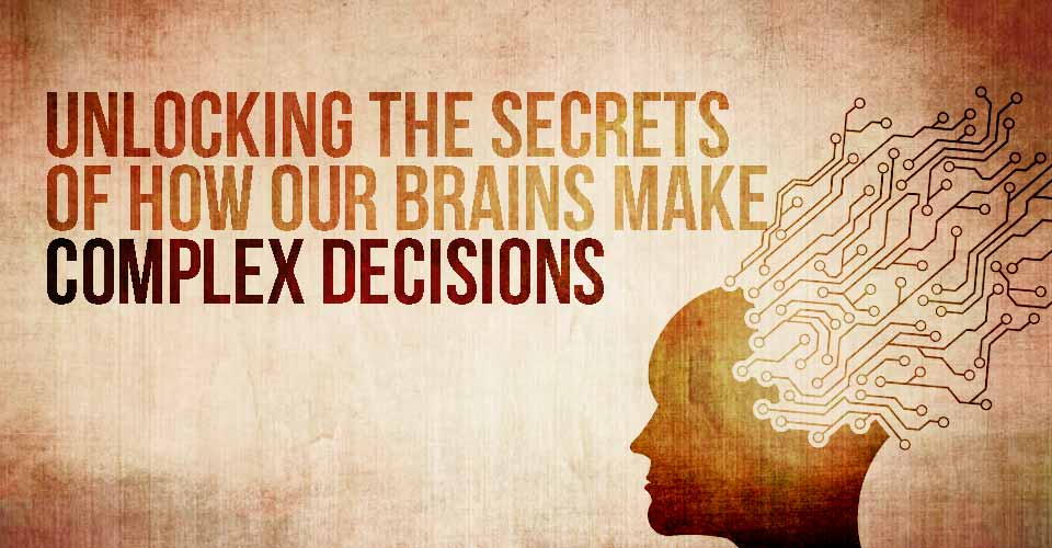 Unlocking the Secrets of how Our Brains Make Complex Decisions