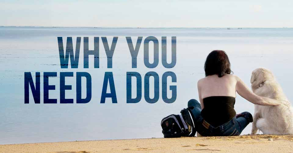 Why You Need a Dog