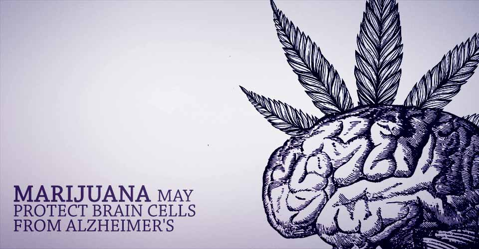 Marijuana May Protect Brain Cells from Alzheimer's