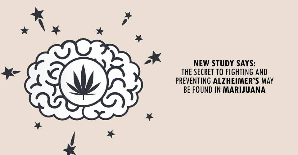 New Study Says: The Secret To Fighting And Preventing Alzheimer's May Be Found In Marijuana