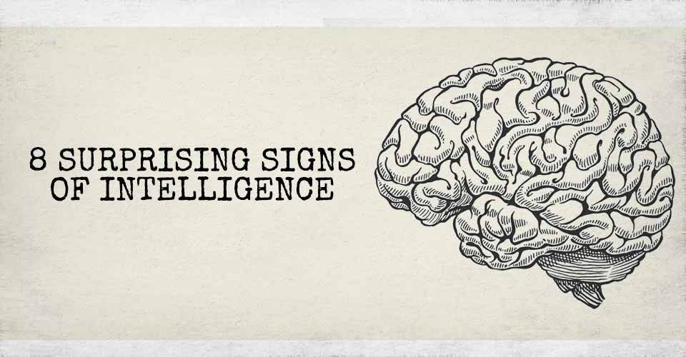 8 Surprising Signs of Intelligence