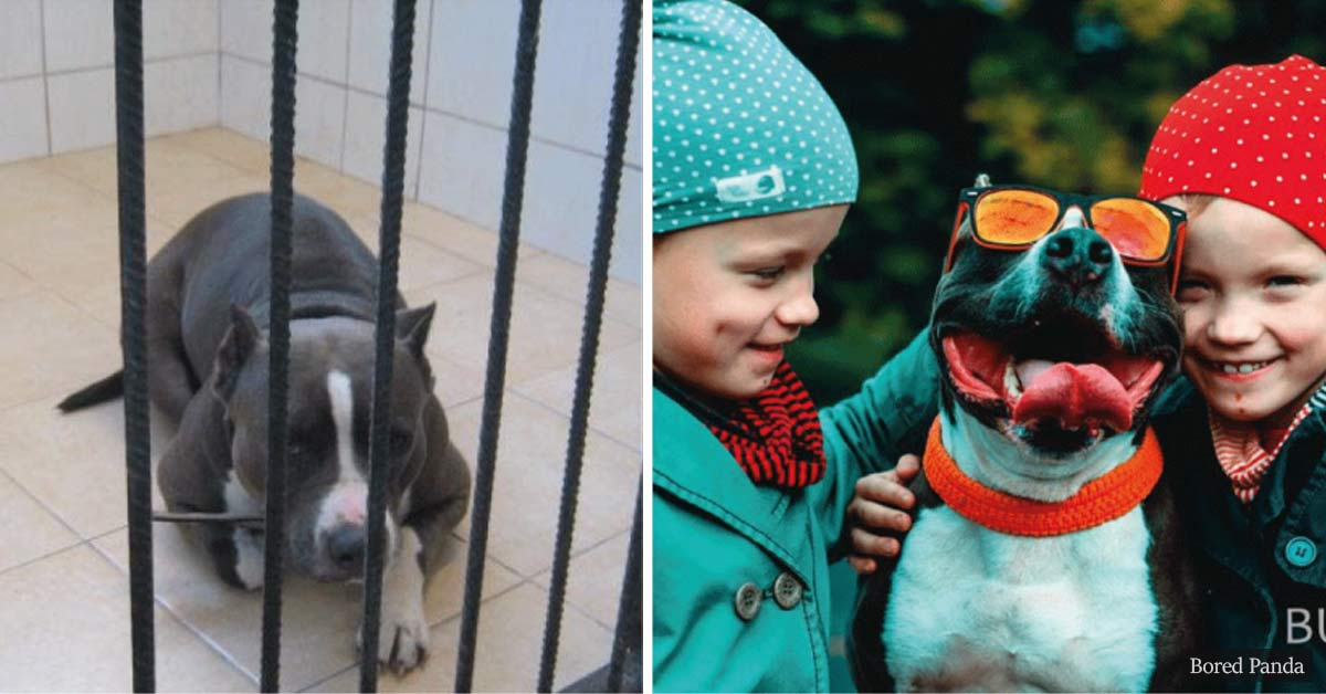 30+ pictures of former shelter pets before and after finding loving homes