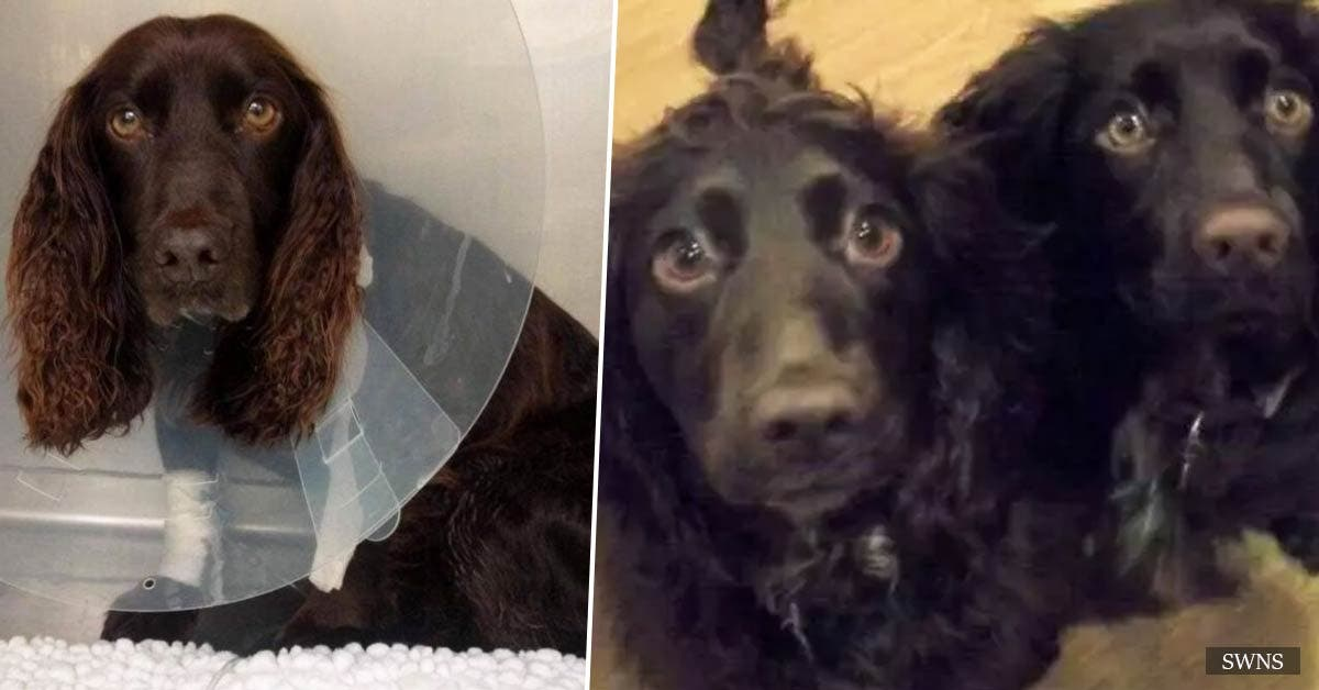 Dog travels 4,000 miles to save the life of one of its puppies