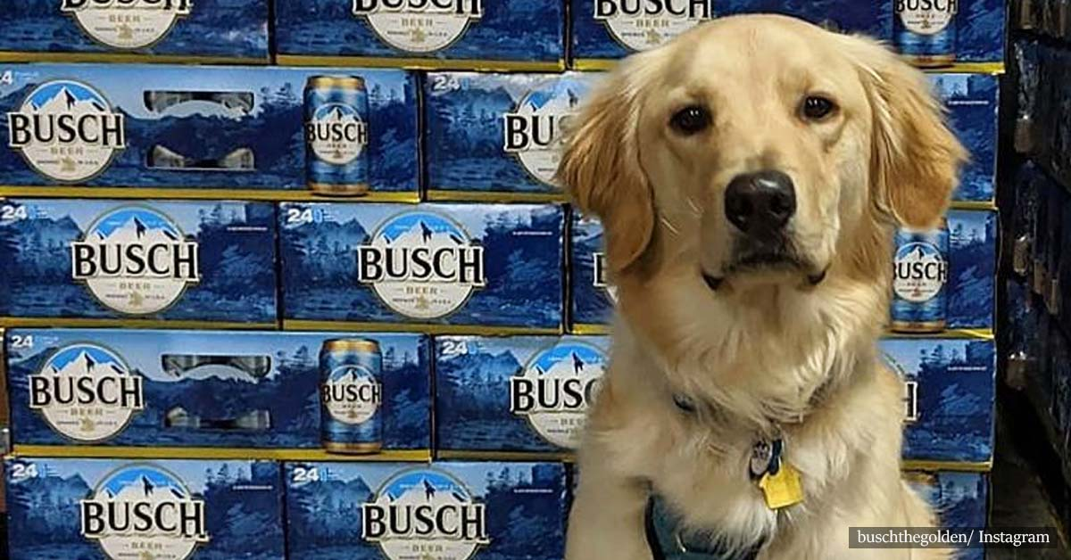 Busch Is Giving 3 Months' Worth Of Beer To People Who Adopt Or Foster A Dog During Coronavirus Pandemic