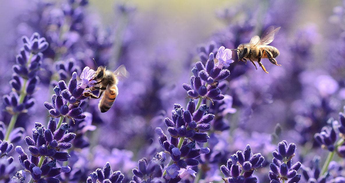 Bees are THRIVING as pollution levels drop during lockdown