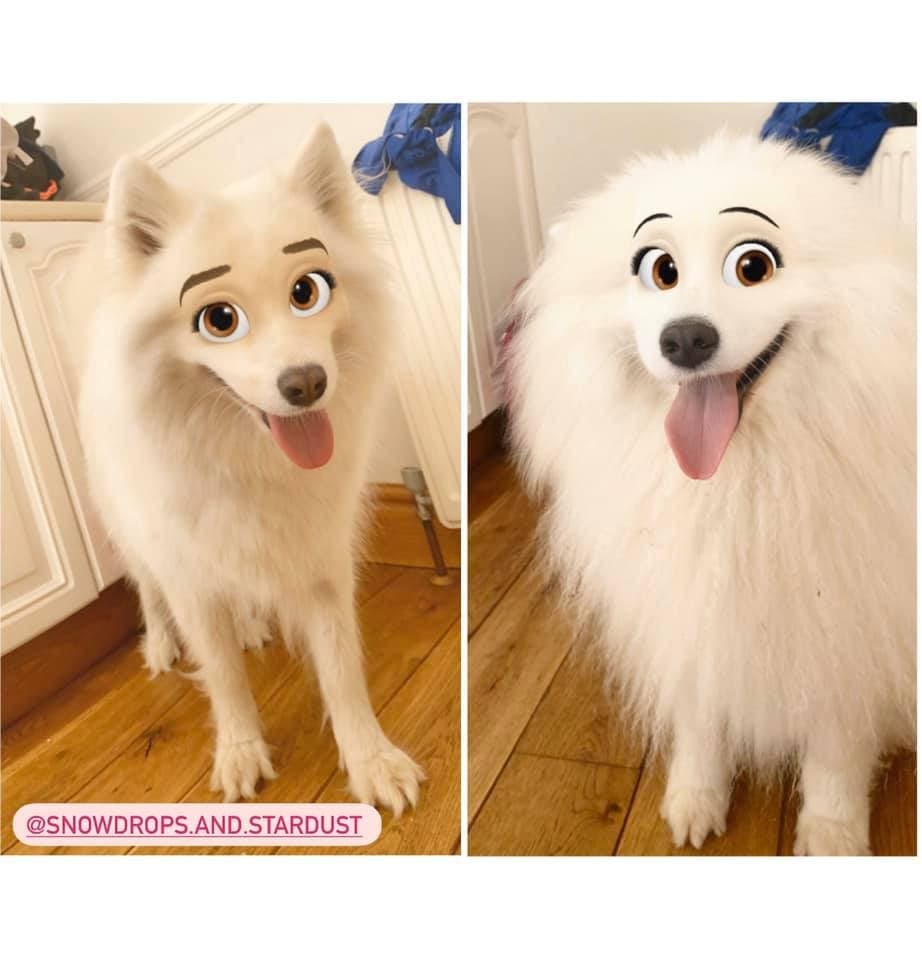 This New Snapchat Filter Makes Your Dog Look Like A Disney Character