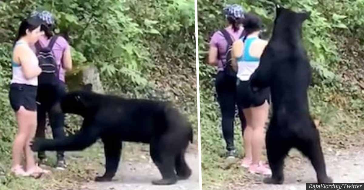 Wild Bear That Sniffed Woman's Hair Castrated